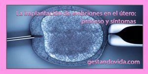 La implantación de embriones en el útero